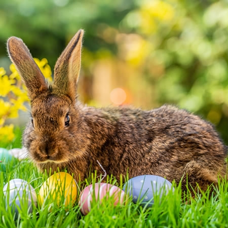 Visit The Nature Institute for a bunny breakfast, egg hunt and spring hikes.
