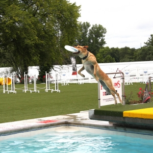 Jump on in — with your dog! — to teach diving dog