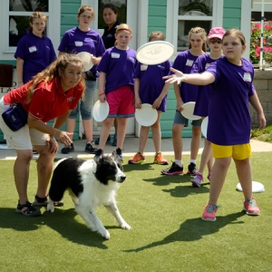 Starting your dog on the disc: Tips from the Purina Farms trainers