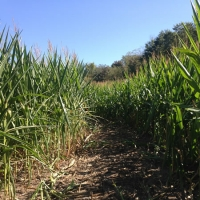 Best bets for corn mazes