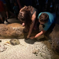 Aquatic adventure: Springfield aquarium takes guests on an undersea expedition